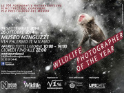 """Wildlife Photographer of the Year 2014"" a Milano dal 19 al 26 ottobre 2014"